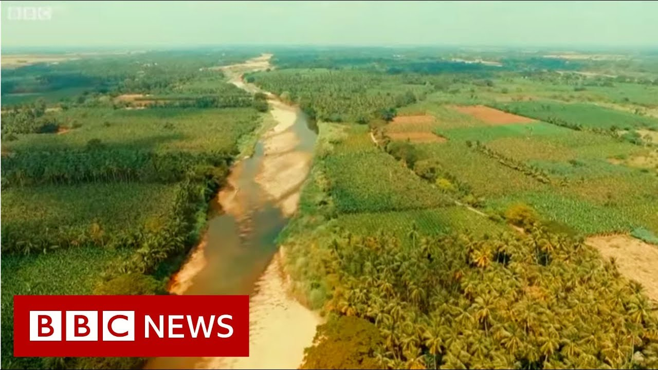 River Stories: Cauvery river - BBC News