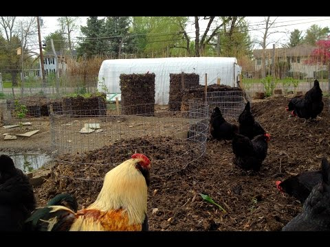 Chicken Compost -  Compost Ring Gardens and Amazing soil!