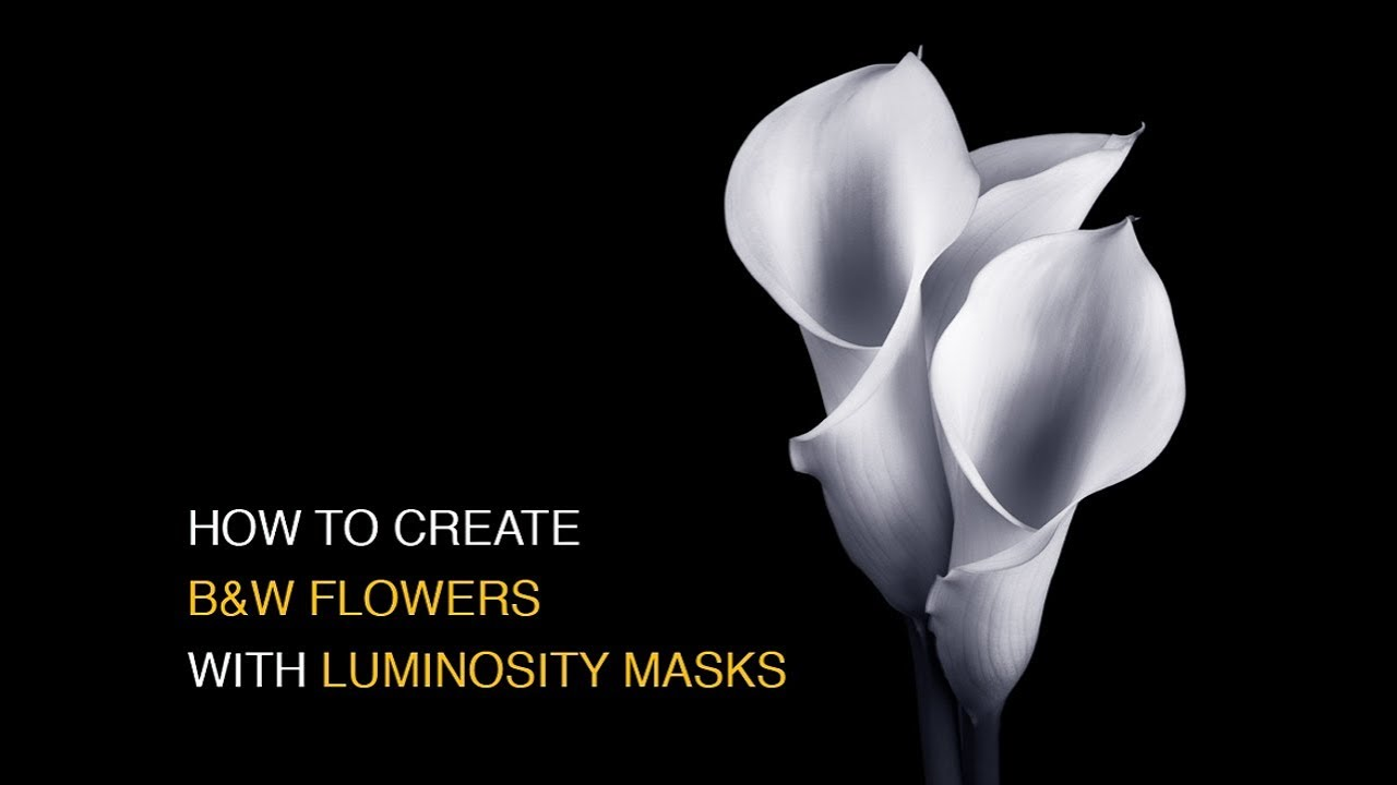 How to create black and white flowers with luminosity masks in how to create black and white flowers with luminosity masks in photoshop mightylinksfo