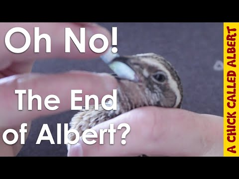 Oh No! The end of Albert?