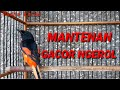 Mantenan Gacor  Mp3 - Mp4 Download
