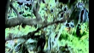 Kraftwerk- Radioland