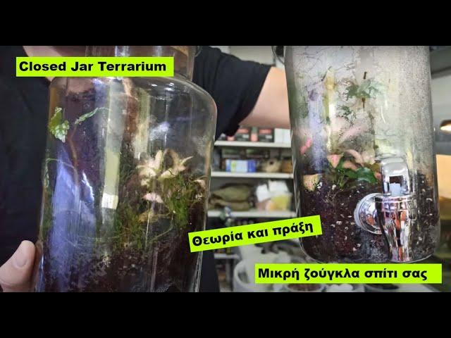 Closed Jar Terrarium Set up Θεωρία και πράξη  Planters ep3