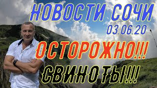 Новости Сочи 03 07 2020г ОСТОРОЖНО В городе СВИНОТЫ