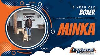 """3-year Old """"minka:"""" Bit A Child.  Aggressive Dog Training"""