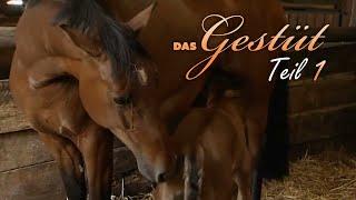 Das Gestüt - Teil 1 - Fohlensaison Dokumentation, deutsch, Lehrfilm, Doku für Kinder
