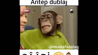 Sapık Maymun ( ANTEP DUBLAJ )