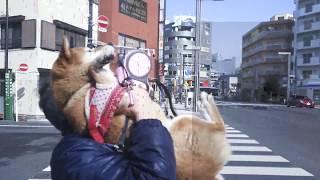 隅田川を渡って、墨田公園 早く 歩いて、スカイツリー見えるかな?高い ...