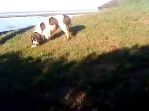 Videos Dicky Chanteuse Et Bavette 014