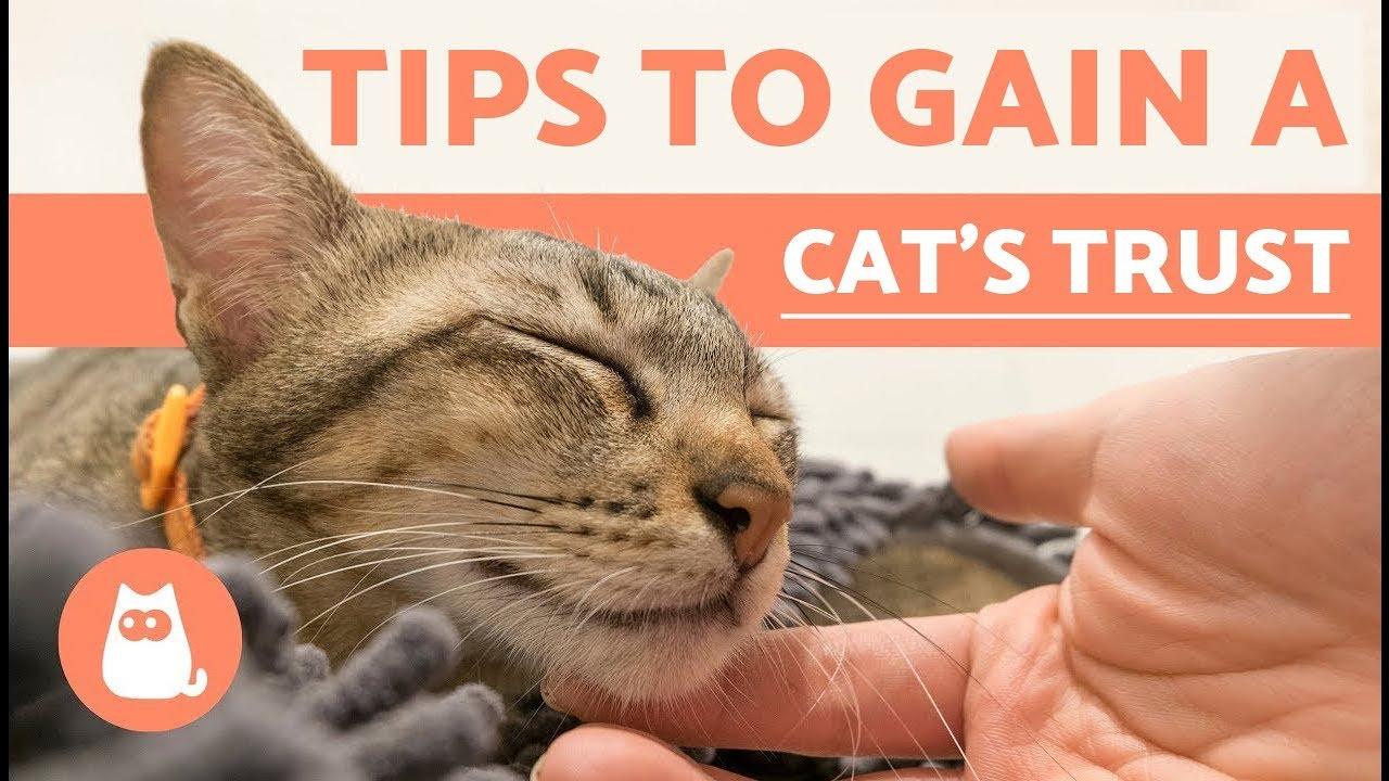 How to Gain a Cats Trust How to Gain a Cats Trust new pics