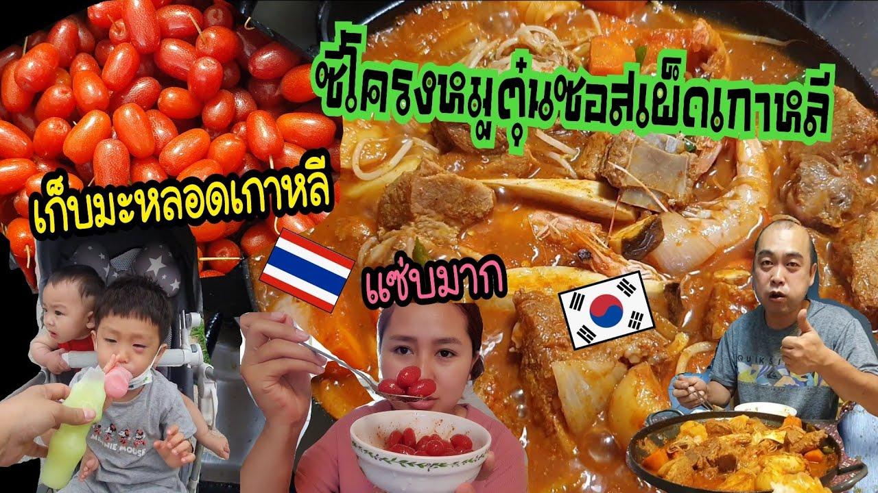 Ep.565 #แม่บ้านเกาหลี พาเก็บมะหลอดเกาหลีมาคลุกพริกป่นปลาร้าแซ่บมาก ทำซี่โครงหมูตุ๋นสไตล์เกาหลี