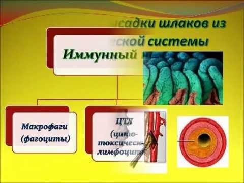 Малярия, симптомы и лечение малярии