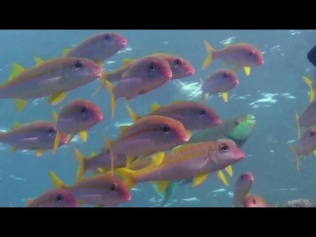 БАРАБУЛЬКА СУЛТАНКА. О чём молчат рыбы 21