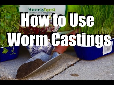 Using Worm Castings In Your Garden What Why How Feeding