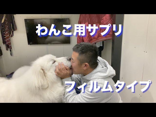 犬用サプリ フィルムタイプのご紹介
