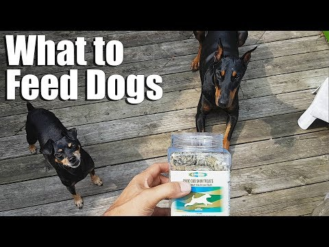 Why Feed Raw Food to Dogs | Feeding Dogs | PurePaw Nutrition