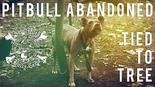 New York Bully Crew | Pitbull Abandoned Tied To Tree for Days