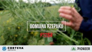 Demo Farma w Rogowie - Ocena odmiany marki Pioneer PT264 rzepaku ozimego