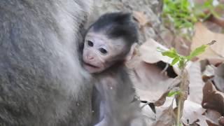 Adorable newborn monkey, Really cute newborn monkey