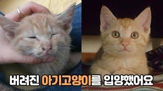 버려진 아기 고양이 입양 하는날