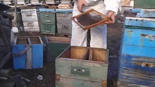 Универсальный метод борьбы с роением пчел (схематично) -  уроки пчеловодства
