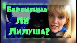 УЗИ собаке. Беременна ли Лилу?