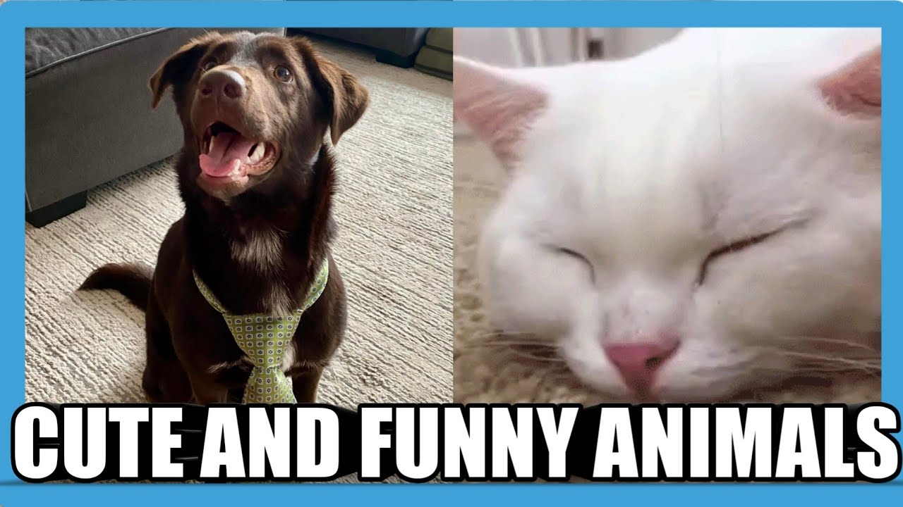 Cute and Funny Animals Compilation #10