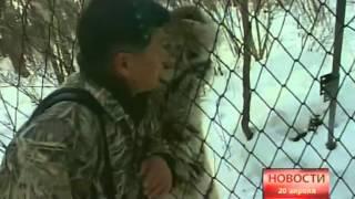 Новости.Умер тигр Лютый
