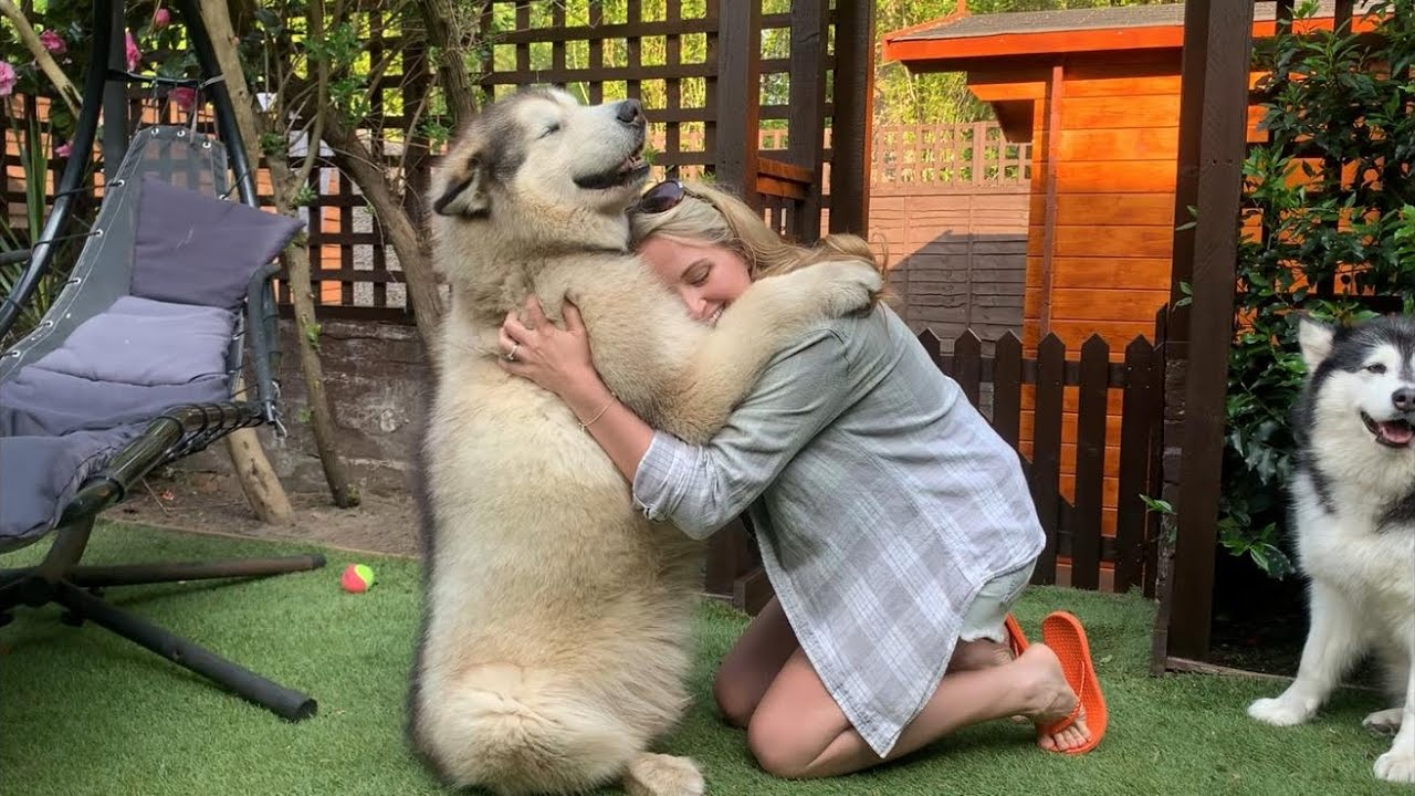 Life With Malamutes Youtube Channel Analytics And Report Powered By Noxinfluencer Mobile The most pleasant moments of life with animals and so on. life with malamutes youtube channel