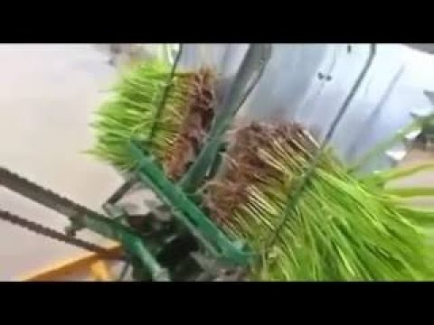 agriculture in india agriculture jugaad । farmer use this Indian jugaad technology !