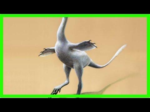 New dinosaur looks like mix of duck, crocodile, ostrich, swan