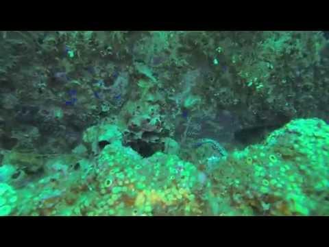 Diving bridge span 2 and the USS Strength in Panama City Beach Florida