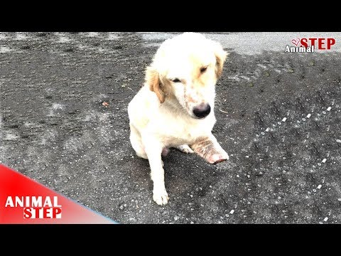 Update! Three Legged Dog Who Waiting For Help On The Street