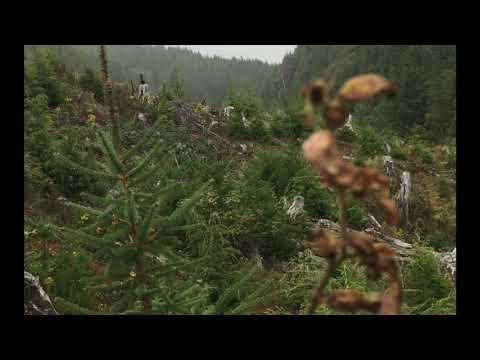 Oregon Coast Elk Hunt 2019