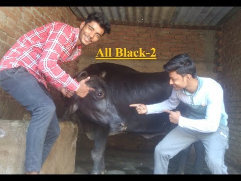 All Black-2  | Sukhe | Raftaar | T-Series [Bhai Bhai].