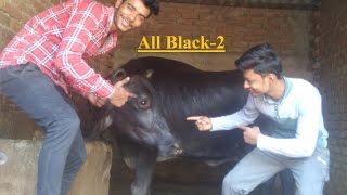 All Black-2  | Sukhe | Raftaar | T-Series [Bhai Bhai].