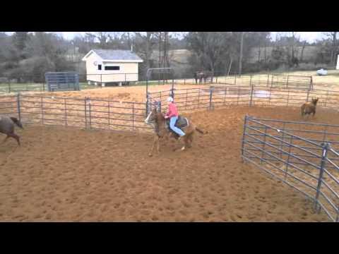 Stranger Buckner Cowhorses