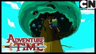 Время приключений | На дереве | Cartoon Network