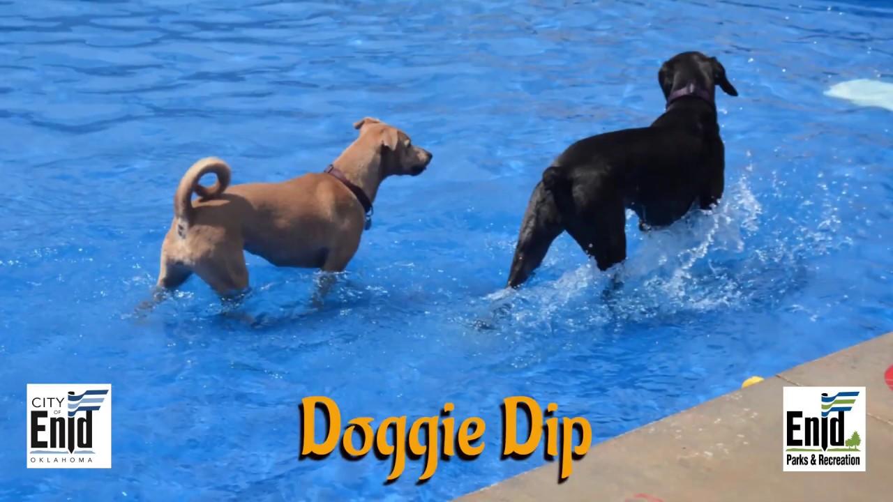 Doggie Dip 2019 at Champlin Pool (Enid, Oklahoma)