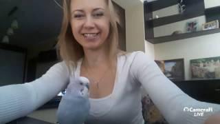 Прямая трансляция JessLife(ч1) Что делать если хомяк кусается    как приручить попугая