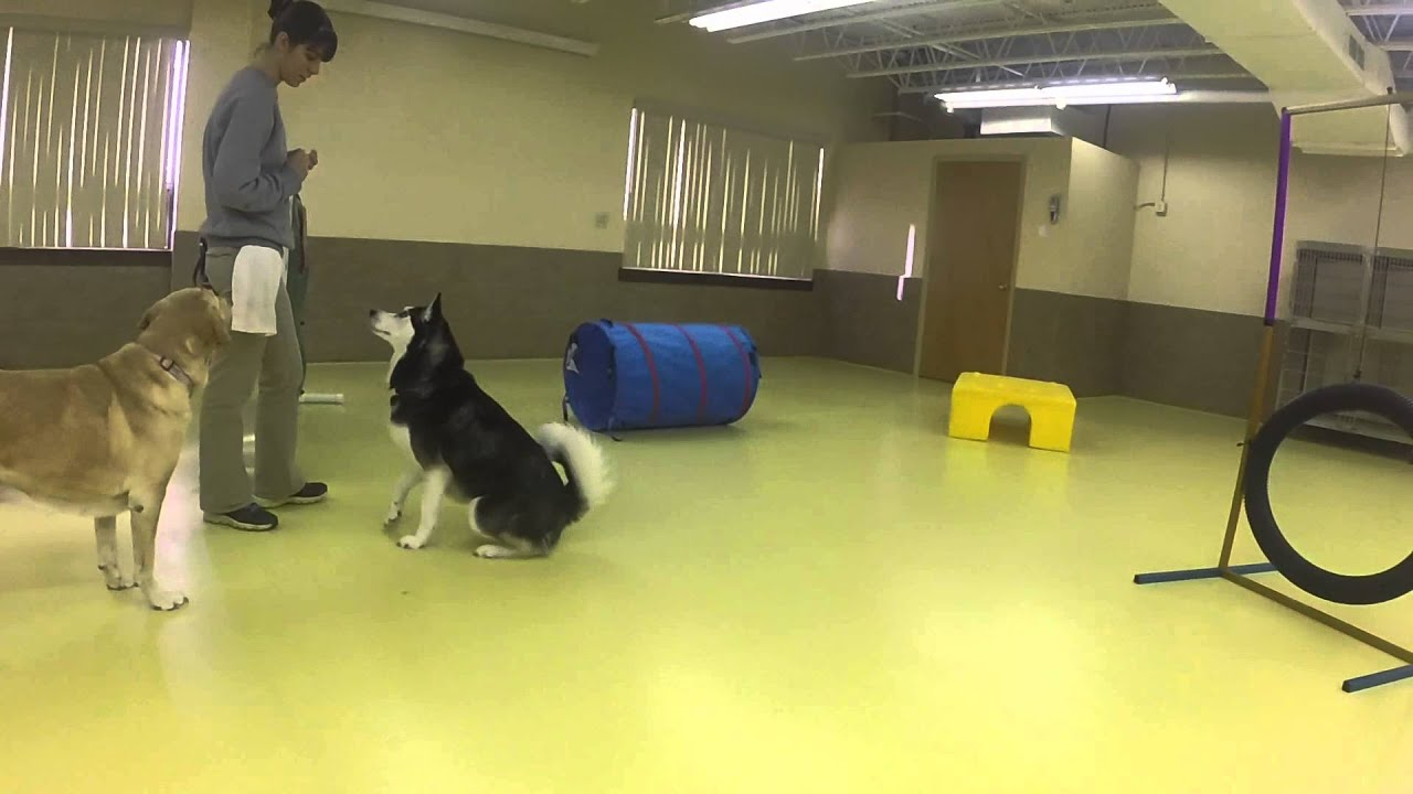 New Beginnings Dog Boarding Fun Cincinnati Ohio Youtube