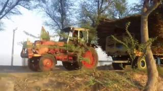 sugar cane big trailer going to madina sugar mill today at chiniot must watch 2017