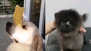 *IF YOU THINK ABOUT CREATIVITY, THESE DOGS ARE CREATIVE!   FUNNY DOGS VIDEO*
