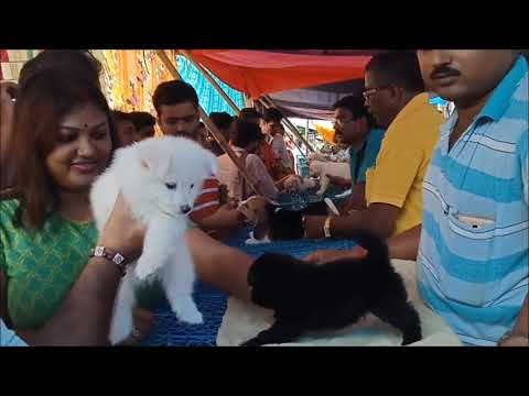Happy Couple Get Their Favourite Puppy At Galiff Street