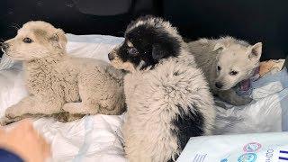 Реакция диких щенят которых спасли с ямы Везем домой купать rescue stray puppies