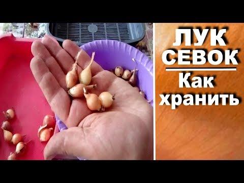 Как хранить в домашних условиях хранить лук севок до посадки