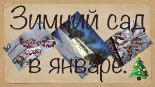 видео Зимний сад в квартире: оранжерея для души. Обсуждение на LiveInternet