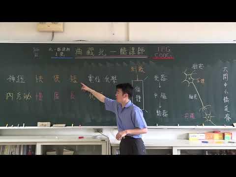 【潘彥宏老師】基礎生物(上) 26 | 第三章動物的構造與功能  第五節 感應與協調