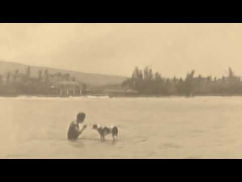 Surfing Dogs - Funny dog video