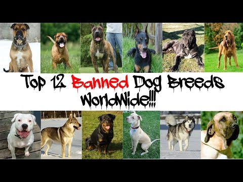 Top 12 Banned Dog Breeds Worldwide!!!